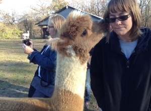 TPK Retreat 2015 Alpaca and Ginger