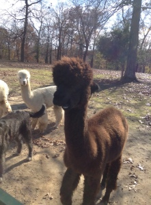 TPK Retreat 2015 brown alpaca
